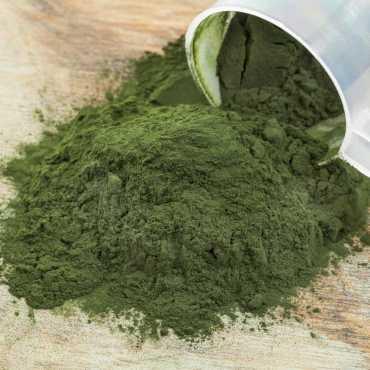 blue green algae γαλαζοπράσινα φύκια